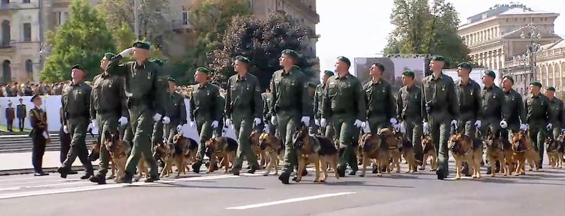 собаки на параде