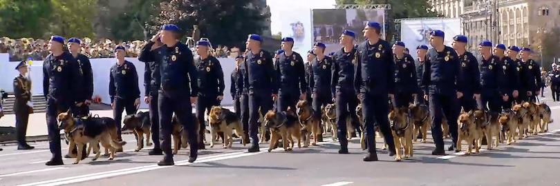 собаки на параде 2021